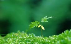 綠色生態植物幼苗背景圖