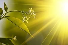 梦幻植物背景高清图片
