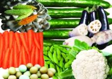 蔬菜素材图片