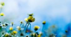 花卉特写图片