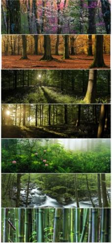 森林和竹林背景