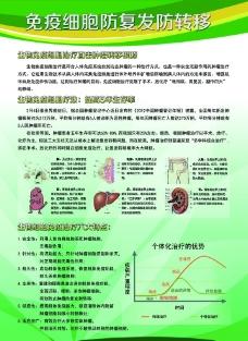 医疗展板 免疫细胞防御图图片