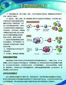 生物细胞治疗 医疗展板图片