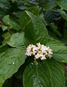 雨后的小花朵图片
