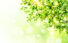 春季树木与阳光矢量素材图片