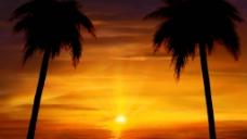 椰树视频素材