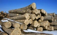 储木场图片