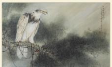 白鷹工筆畫圖片