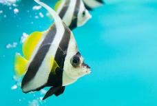 深海鱼类摄影