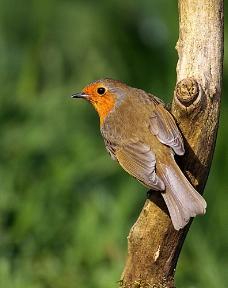 树枝上的小鸟