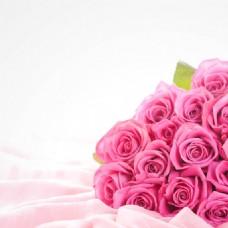 唯美粉色玫瑰花背景图