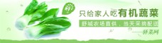 绿色健康蔬菜banner