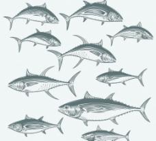 金枪鱼图片