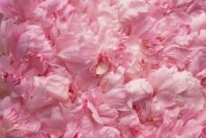 粉色花素材图片